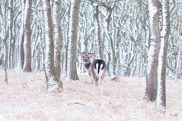 Hert in een besneeuwd bos van Marianne Jonkman