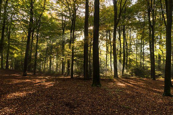 Hoekelumse bos van Elbertsen Fotografie
