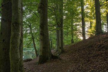 Avondwandeling rond de gondelvijver in Neukirch van Holger Spieker