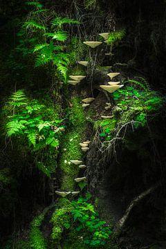 Mushroom Wall, Petri Damstén van 1x