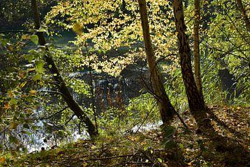 """Landschap  ,doorkijkje bij het water in de herfst van Janny Schilderink......Atelier """"de Tuute """""""