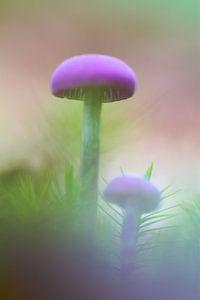 Twee paddenstoelen op mosgrond van