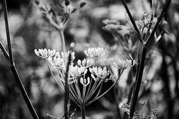Leinwandblume in abstrakter Schwarz-Weiß-Komposition von Bianca ter Riet