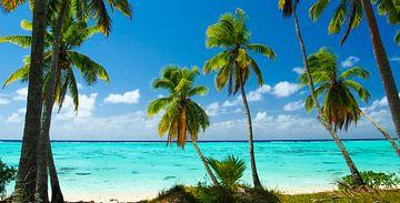 Amuri, Aitutaki - Cook Islands van