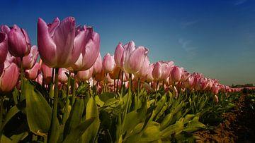 Pink Tulips van Rob Kuijper