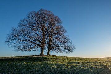 Boom of bomen? von Moetwil en van Dijk - Fotografie