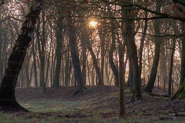 bomen in het ochtendzonnetje van Tania Perneel