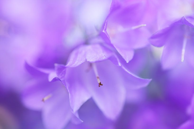 Bluebell dreams... van LHJB Photography