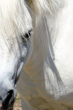 Verliefd op het paard van Ellinor Creation