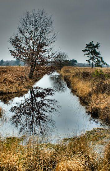 on a grey day van Jo Beerens
