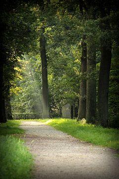 Aan het einde van het pad... van