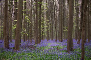 Kleurrijk bos van