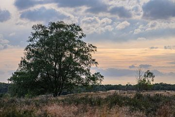 wolkenlucht over de hei van Tania Perneel