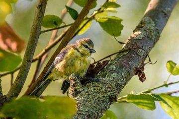 nieuwsgierig in de boom van claes touber