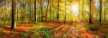 Herbstlicher Wald mit strahlender Morgensonne von Günter Albers