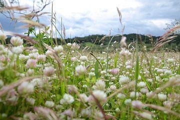 Blumenwiese von Angelica van den Berg
