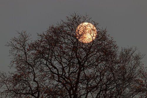 La lune à travers l'arbre.