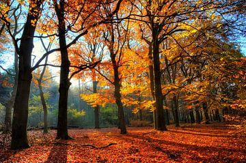 Spanderswoud Herfst von Dennis van de Water