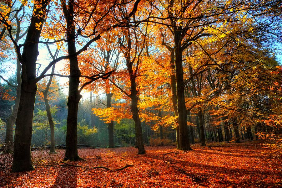 Spanderswoud Herfst
