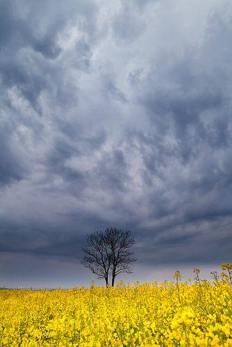 Alone in the clouds