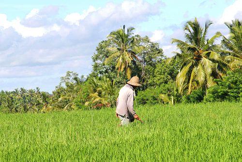 Werken in de rijstvelden, Bali, Indonesie
