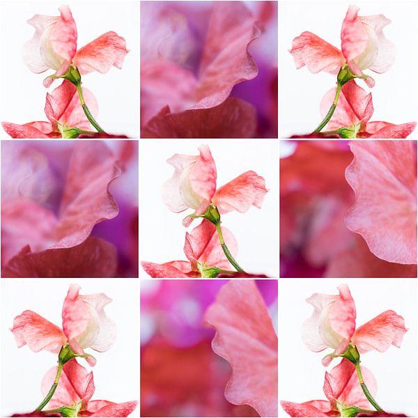 Lathyrus - collage 2 van Rob van der Pijll