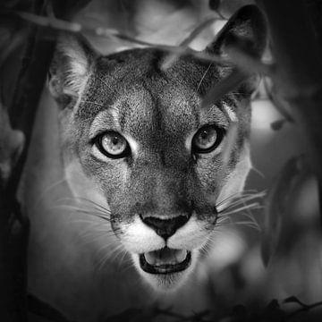 Porträt von Puma von Frans Lemmens