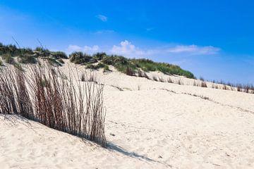 de duinen op het strand van texel van Martin Albers