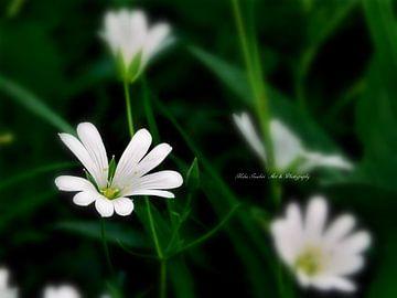 White fairy van Mika Iwakiri