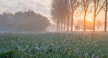 sfeervolle dageraad van Tania Perneel