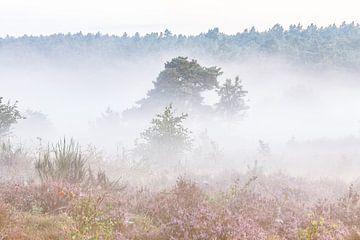 Heide landschap met mist van