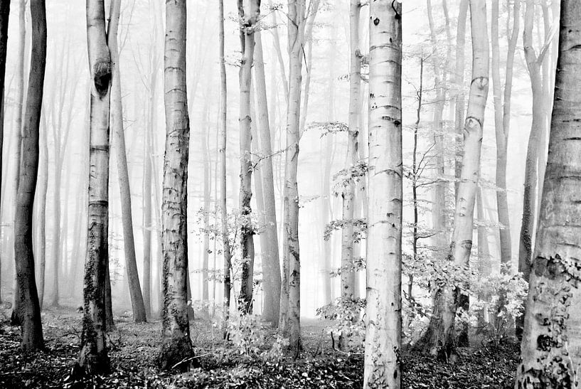 cloud forest van Norbert Sülzner