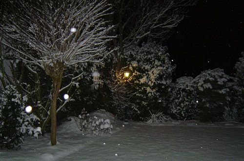 Tuin in winter pracht. van
