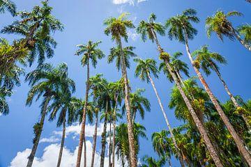 Palmbomen in de Palmentuin, Paramaribo van Marcel Bakker