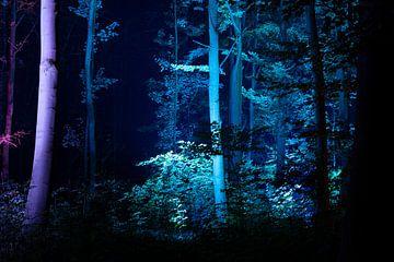 Ein Stück Magie, versteckt am Rande des Kralingse Bos. von Tjeerd Kruse