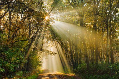 Gouden zonnestralen in herfstbos van Karla Leeftink