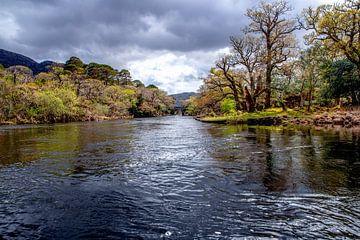 Frühling Fluss von Rene Siebring