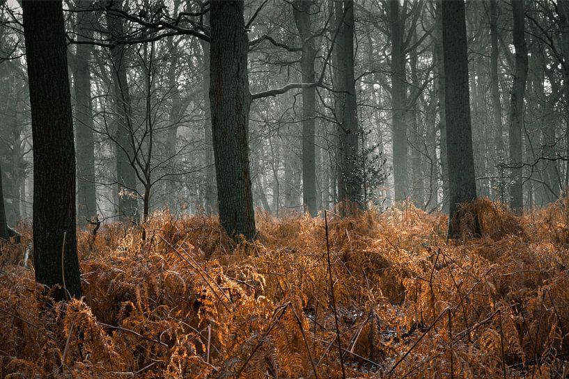 Door het bos de bomen zien van Inez VAN DE WEYER