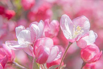 appel bloesem van Hanneke Luit