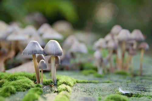Herfst met paddenstoelen van