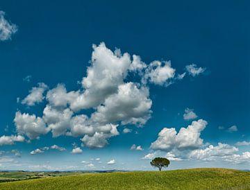 Einzame Baum in den Toskaner Landschaft, Italien von Rene van der Meer