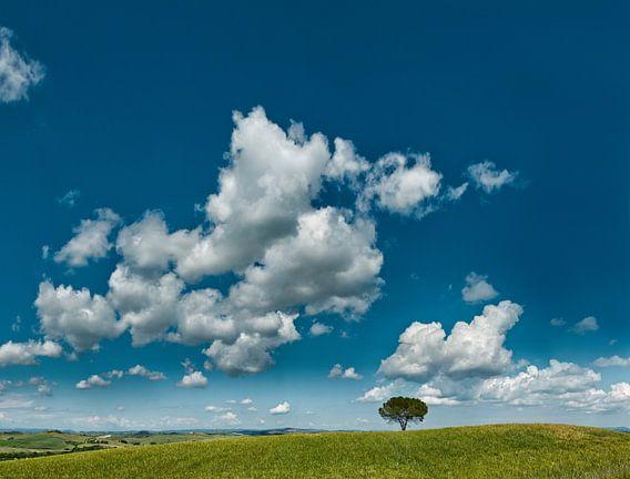 Heuvellandschap, Isola d'Arbia, Toscane, Italië van Rene van der Meer