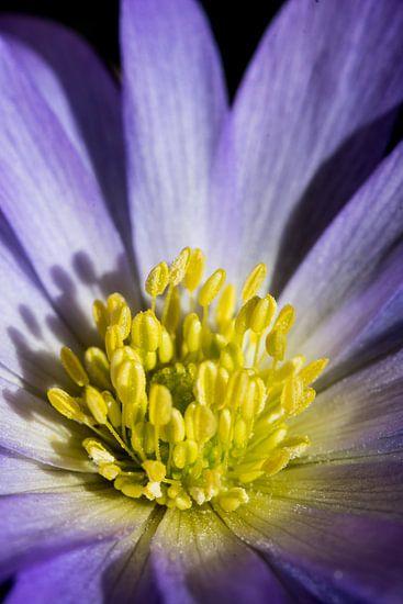 closeup van een bloem 01 van Arjen Schippers