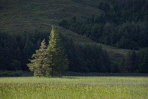 Baum in der Sonne von Anna Windig
