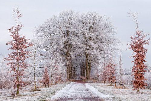 Winter Nienoord Leek Groningen:  Bomen met rijp
