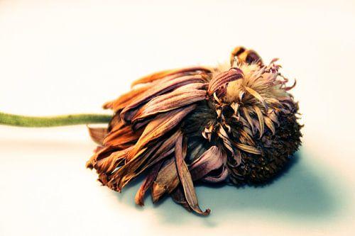 DEAD FLOWER - ORIGINAL