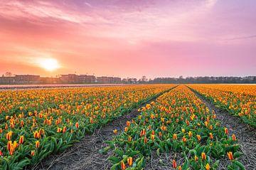 Tulpenveld met zonsondergang van Richard Steenvoorden