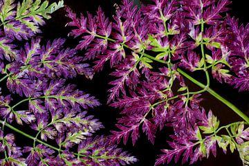 Herfstkleuren von Jolanta Mayerberg