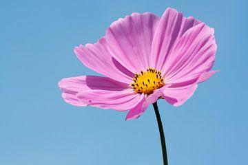 Roze bloem van Evelyne Renske