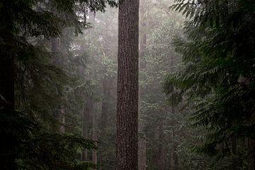 Forest Life von Remco van Adrichem
